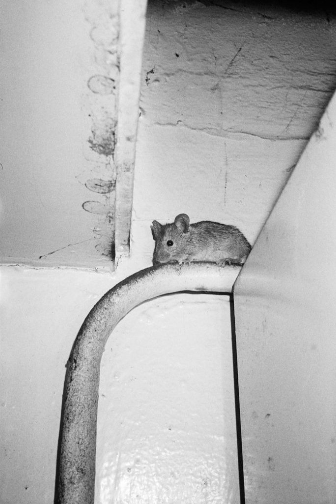 Marijn de Jong, kitchen mouse